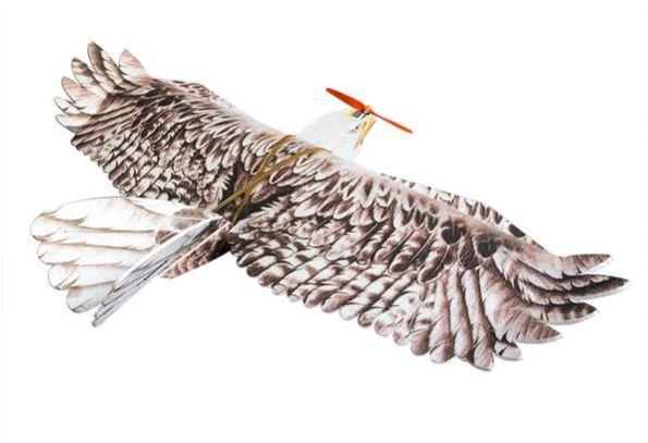 Eagle Dancing Wings